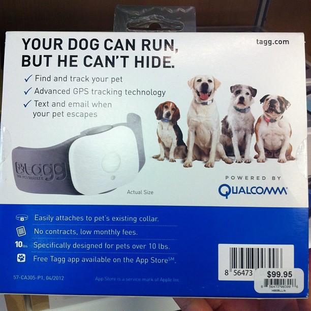 Dog_wearable