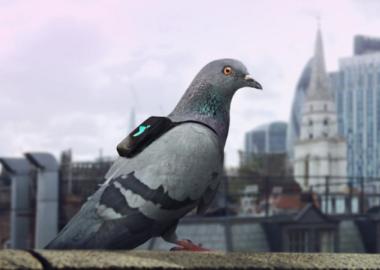 pigeonair-640x0