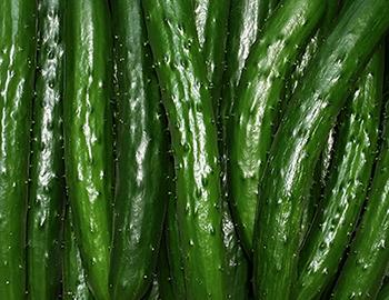 cucumber-farmer-7