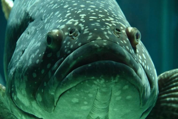 fish-aquarium-school-of-fish-under-water-159496